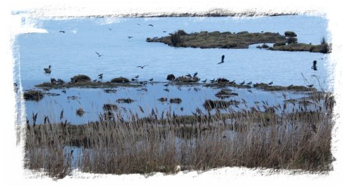 Oare Marshes, Kent on a cold January day ©vcsinden2012