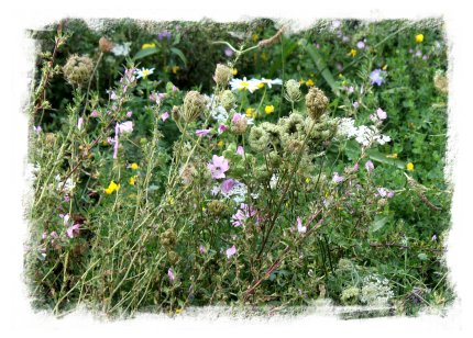 Wild flower plantings in the Olympic Park, London ©vcsinden2012