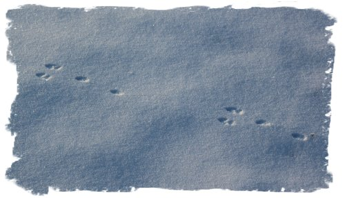 Snow footprints - rabbit