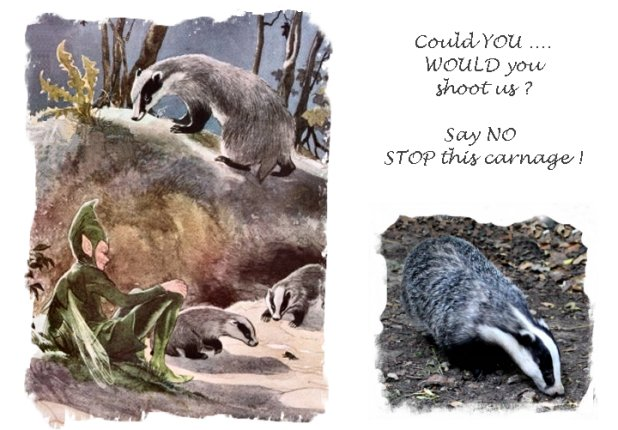 badger Culling - Say NO!  ©vcsinden2013