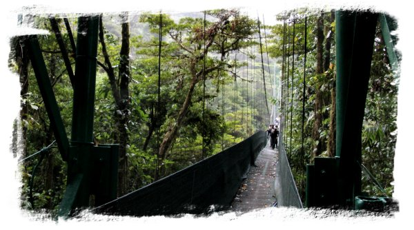Monteverde Cloud Forest - Sky Walk bridges ©vcsinden2013