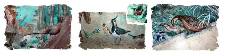 Details of birds from the John Ward murals in Challock Church, Kent ©vcsinden2013