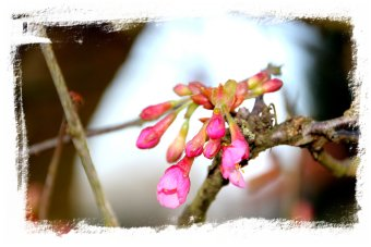 Early Spring blossom ©vcsinden2014