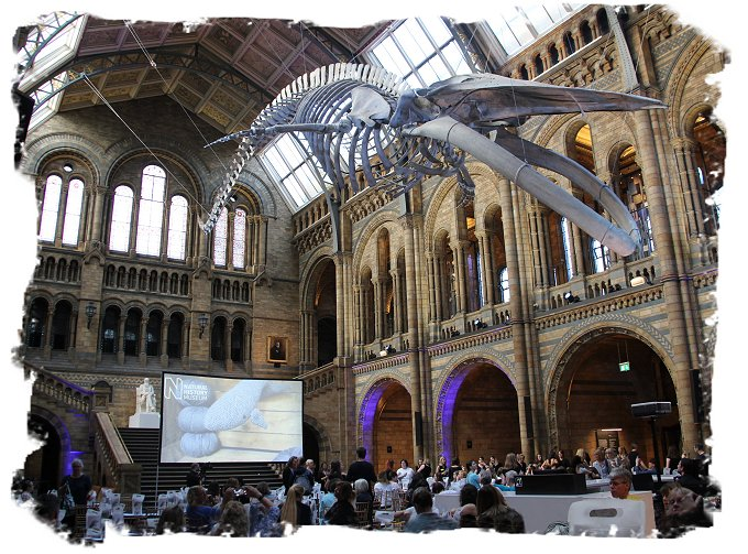 'Hope' the whale hangs suspended above the evening Crochet a blue whale Workshop at the Natural History Museum, London ©vcsinden2017