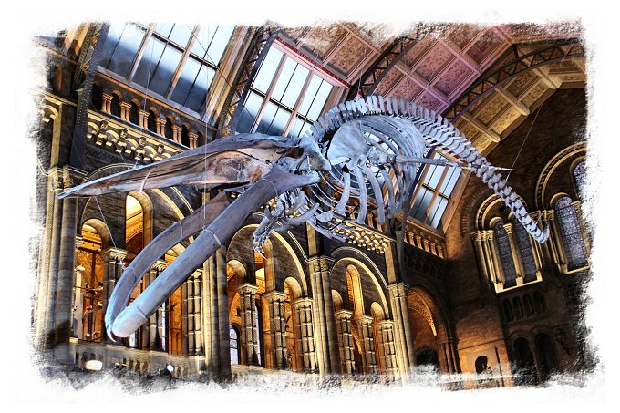 'Hope' – the blue whale exhibit in the Natural History Museum, London ©vcsinden2017