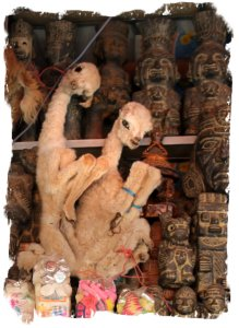 The Witches Market - La Paz - Bolivia - Llama foetus