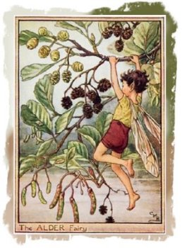 The Alder Fairy by Cecily Mary Barker