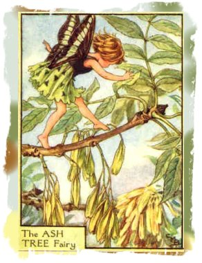 Ash Tree Fairy - Celily mary Barker