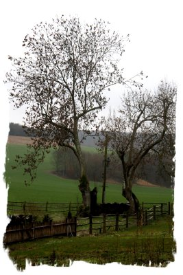Ash in winter - ancient and hollow, Challock, Kent