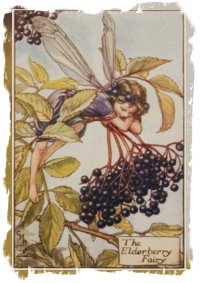 'The Elderberry Fairy' - Cecily Mary Barker