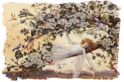 'Ariel' -the fairy is shown enthroned in Hawthorn blossom - by John Anster Fitzgerald