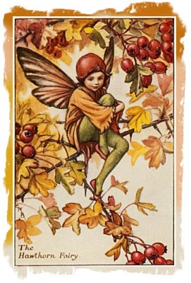 'The Hawthorn Fairy' by Cecily Mary Baker