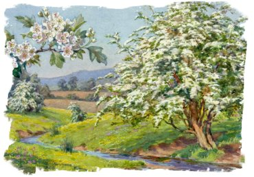 Margaret Tarrant illutration of spring blossoming Hawthorn