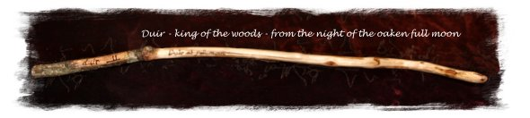 Wand - Duir, king of the woods, natural, cut at full moon ©vcsinden2011