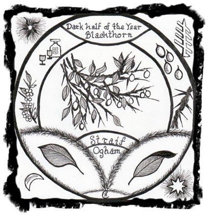 Blackthorn Tree Drawing The Ogham Trees Straif