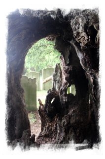Crowhurst Yew - inside looking out  ©vcsinden2012