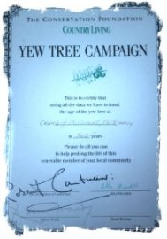 Yew tree age verification certificate at St Clements, Old Romney
