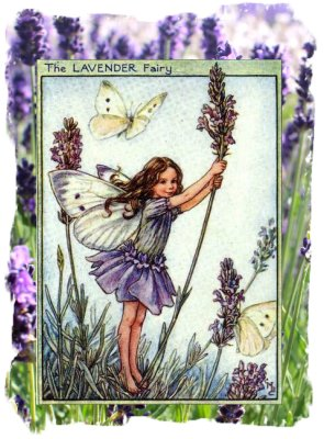 the Lavender Fairy - Cecily Mary Baker