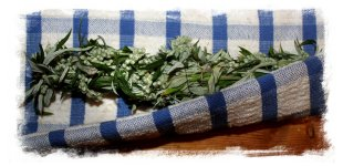 How to make a smudge stick - mugwort bunch being rolled ©vcsinden2012