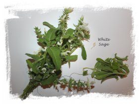 Smudging herbs - white sage ready for tying ©vcsinden2012