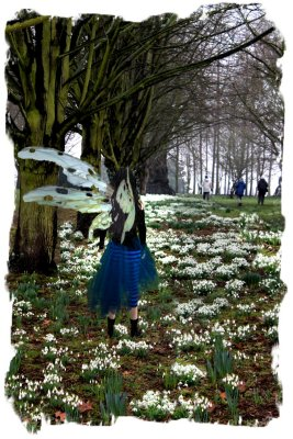 Muddypond Green among the snowdrops in the rain