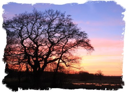 Oak tree at sunset in March ©vcsinden2011