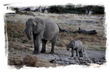 Etosha - mother and baby elephant ©vcsinden2014