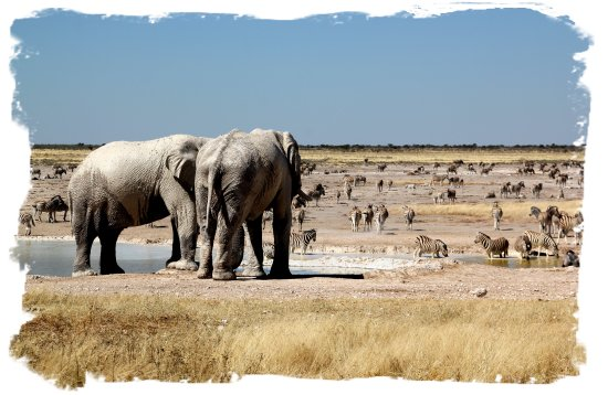 Etosha - herds of animals at Nebrowni ©vcsinden2014