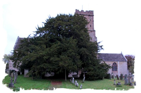 Ancient Yew tree, St. Bartholemew's Church, Much Marcle, Herefordshire ©vcsinden2014