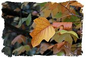 Autumn colour for All Hallow's Eve ©vcsinden2014