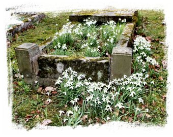 Snowdrop grave at Hunton Church, Kent ©vcsinden2014